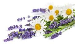 Пук стоцветов и цветков лаванды на белой предпосылке Стоковая Фотография