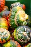 Пук толстеньких и сочных тыкв праздника Стоковое Изображение