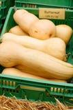 Пук толстеньких и сочных тыкв праздника Стоковое фото RF