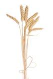 Пук ушей пшеницы на светлой предпосылке стоковые фото
