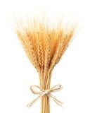 Пук ушей пшеницы стоковое изображение