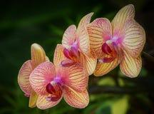 Пук фиолетовых и желтых орхидей Стоковое фото RF
