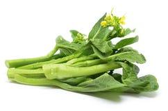 Пук флористического choy овоща зеленого цвета суммы Стоковое Изображение