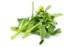 Пук флористического choy овоща зеленого цвета суммы Стоковые Фото