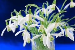 пук цветет snowdrop nivalis galanthus Стоковая Фотография RF