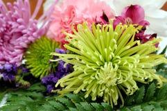 Пук цветков астры маргаритки Стоковое Изображение RF