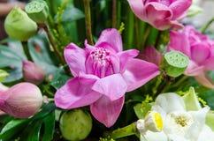 Пук цветков лотоса закрывает вверх Стоковое Фото