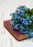 Пук цветков незабудок стоковое изображение rf