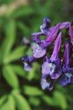 Пук цветков обочины Стоковая Фотография