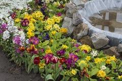 Пук цветков с бассейном рыб Стоковые Изображения