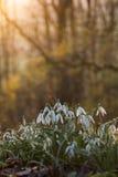 Пук цветков Стоковое Изображение RF