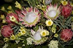 Пук цветков protea стоковое изображение rf