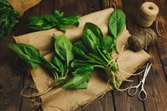 Пук шпината на салфетке выходит на темную деревянную предпосылку стоковые фото