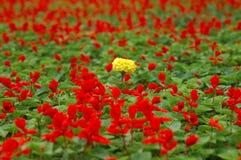 Пук ярких желтых цветков Стоковая Фотография RF
