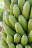 пук o бананов Стоковая Фотография