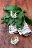 Пук ramson одичалого чеснока в весеннем времени Стоковое Фото