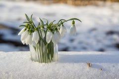 Пук snowdrops в стекле Стоковая Фотография