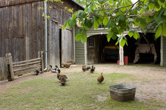 пулярка фермы задворк Стоковое фото RF