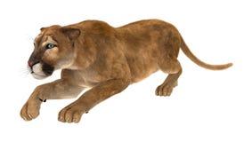пума большой кошки перевода 3D на белизне Стоковая Фотография