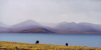 Пума Yumco озера стоковое изображение rf