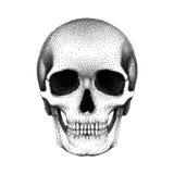 Пунктированный человеческий череп с нижней челюстью Иллюстрация текстурированная вектором Стоковые Фото