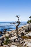 Пункт Pescadero на приводе 17 миль в большом Sur Калифорнии Стоковые Фото