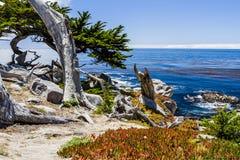 Пункт Pescadero на приводе 17 миль в большом Sur Калифорнии Стоковая Фотография RF