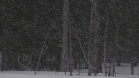 Пурга в сезоне зимы леса Выравнивать сумерки акции видеоматериалы