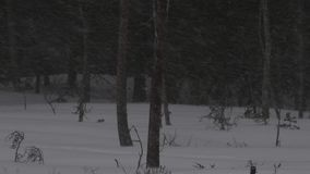 Пурга в сезоне зимы леса Выравнивать сумерки сток-видео
