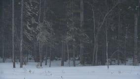 Пурга в сезоне зимы леса Выравнивать сумерки видеоматериал