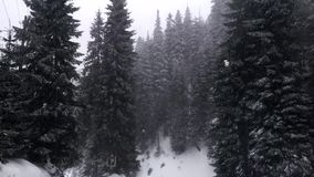 Пурга в украинском лесе сток-видео
