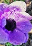 Пурпурный цветок стоковое фото