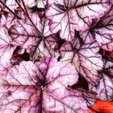 Пурпурные листья стоковые фото