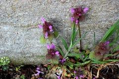 Пурпурные, темно-синие цветки стоковые фотографии rf