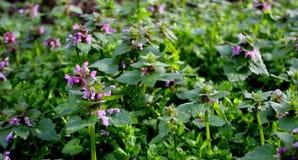 Пурпурные, темно-синие цветки стоковая фотография rf
