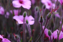 Пурпурные цветки стоковое фото rf