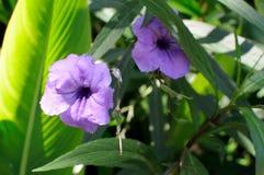 Пурпурные цветки стоковые фотографии rf