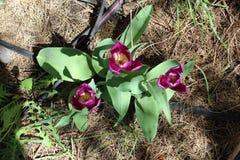 Пурпурные цветки стоковая фотография rf