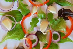 Пурпурный или зеленый базилик, Ruccola, кольца пурпурного лука, красный сладкий перец, чеснок, на белой предпосылке Рамка от свеж стоковые фотографии rf