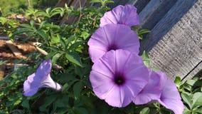 пурпурный цветок стоковые фото