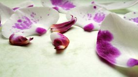 пурпуровая белизна Стоковые Фотографии RF