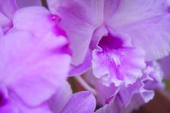 Пурпуровая орхидея стоковое изображение rf