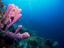 пурпуровая пробка губки Стоковая Фотография RF