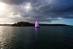 пурпуровое ветрило Стоковое Фото
