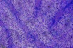 пурпурово Стоковые Изображения RF