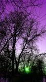 пурпурово Стоковые Фотографии RF