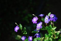 пурпурово Стоковая Фотография RF