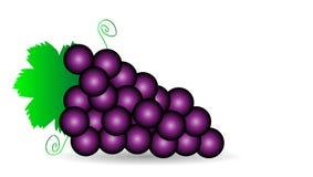 Пурпуровые виноградины иллюстрация штока