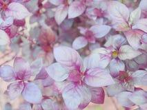 Пурпуровые листья Стоковое Фото