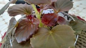 Пурпуровые листья Стоковые Фото